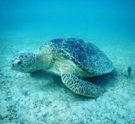 Green Sea Turtle Photography: Finnian Wrigley